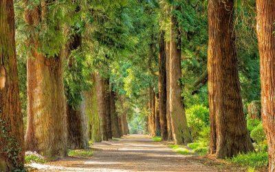 Waarom is wandelen zo goed voor je?